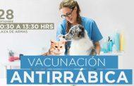 OPERATIVO DE VACUNACIÓN ANTIRRÁBICA GRATUITO