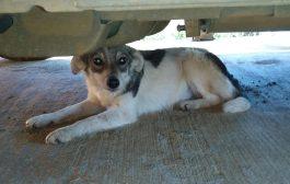 Perritos abandonados necesitan hogar urgente