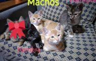 Gatitos y Gatitas
