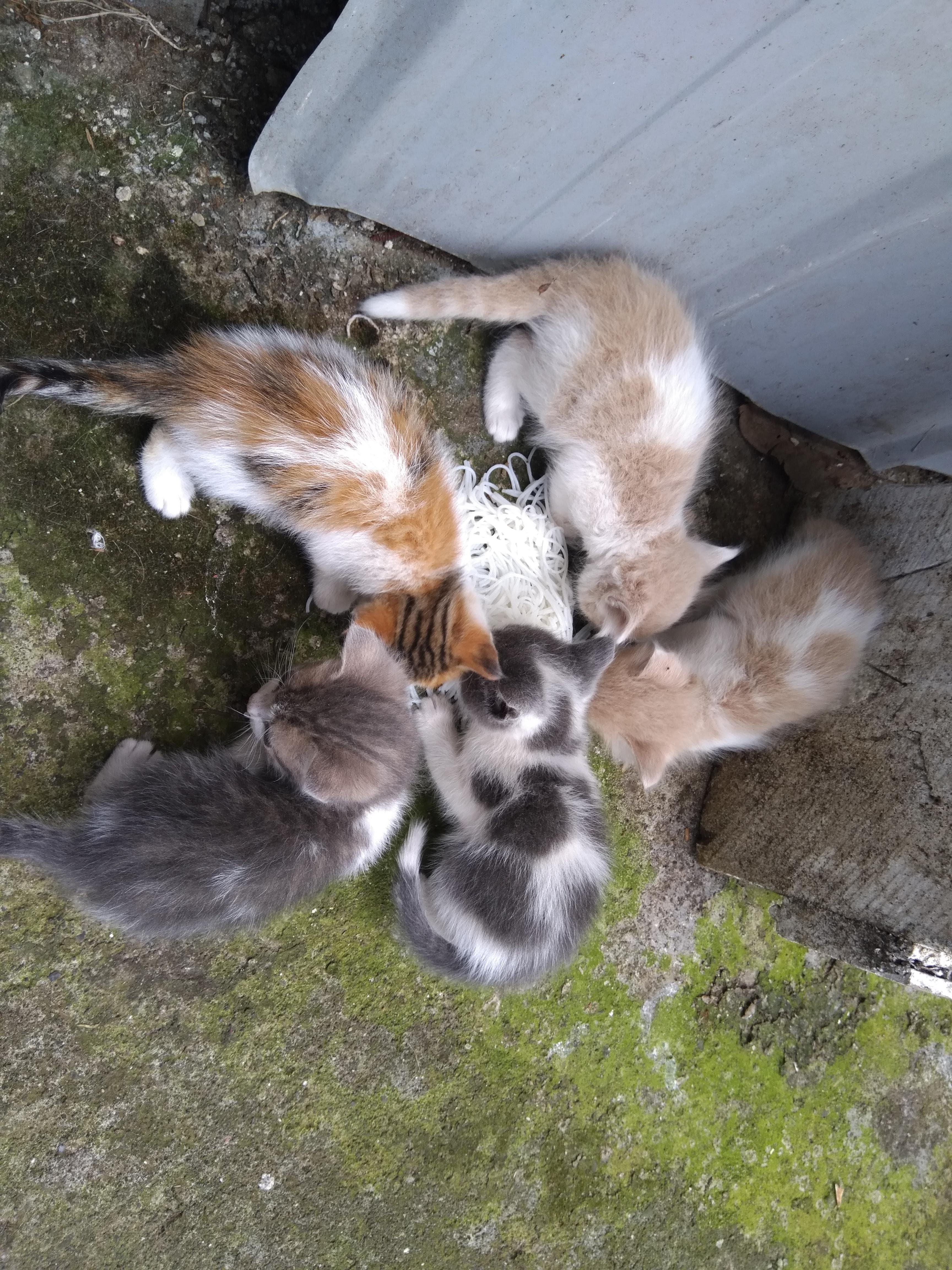 Gatitos y Gatita buscan un nuevo hogar