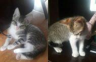 Gatito/a en adopción